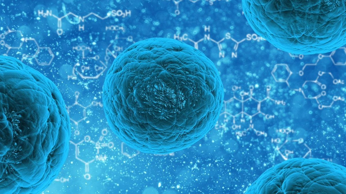 Descubren una nueva célula capaz de producir insulina